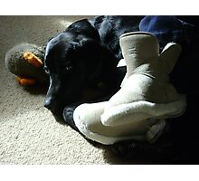 Domestic Bliss (dog at mistress' feet with toy)  Photographic Print
