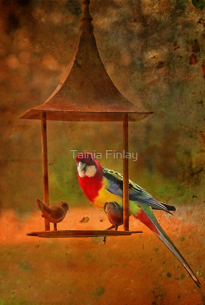 Welcome Visitor by Tainia Finlay