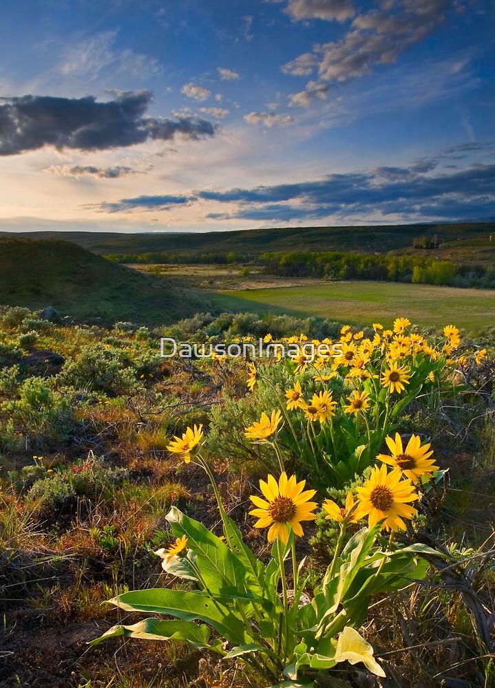 Golden Hills by DawsonImages