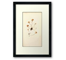 Coloured figures of English fungi or mushrooms James Sowerby 1809 0185 Framed Print