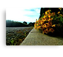 Flowers in Denver Canvas Print