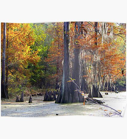 Swamps Have Beauty Too Poster
