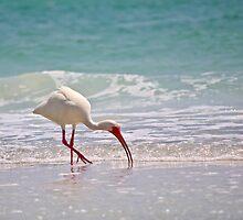 white ibis by Mark de Jong
