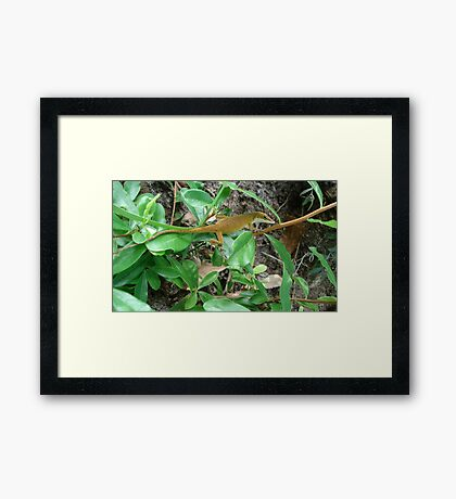 August Anole Framed Print