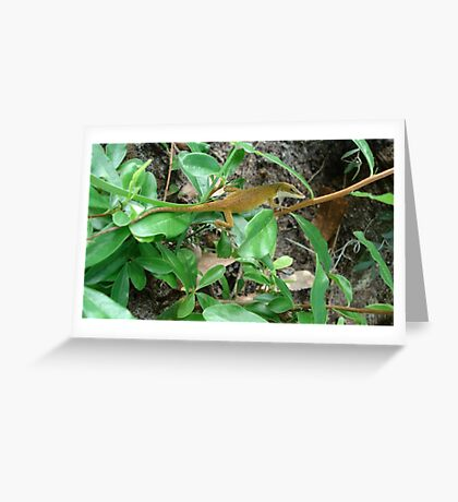 August Anole Greeting Card