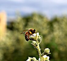 Bee on Flower by Jackson Killion