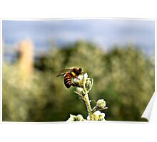 Bee on Flower Poster