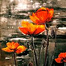The Poppy Journals...Storm by  Janis Zroback