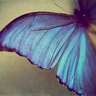 Blue Wing by ameliakayphotog