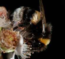 Busy Buzzy Bumble Bee by Bluehaven201