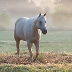 Golden Palomino Horse on a Misty Morning by cuttincwgrl