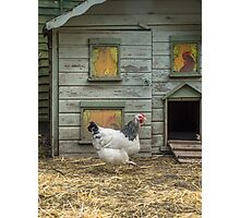 A smart chicken house Photographic Print