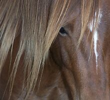 Chestnut Welsh Pony Mare with Long Mane by cuttincwgrl