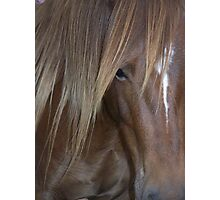 Chestnut Welsh Pony Mare with Long Mane Photographic Print