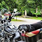 Easy Rider by Brian Gaynor