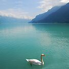 Swan on the Brienzersee in the Swiss Alps by Michael Brewer