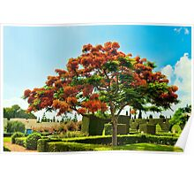 Red flowering tree Poster