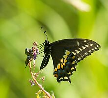 The Beetles And The Swallowtail by EugeJ