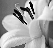 Profile of a Beauty by ameliakayphotog