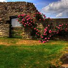 Flowers at Inchcolm by Tom Gomez