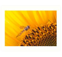 Hover fly on a Sunflower Art Print
