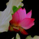 Reddening  by Brian Bo Mei