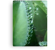 Butterfly Succulent Metal Print