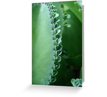 Butterfly Succulent Greeting Card