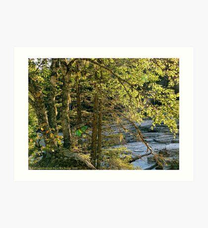 Glacier Autumn - MacDonald Creek Art Print