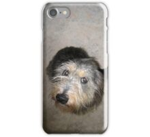 Cute dog looking up iPhone Case/Skin