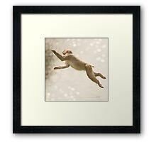 Monkey Jump Framed Print