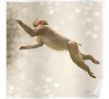 Monkey Jump Poster