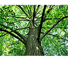 Tree on a Sunny Day Photographic Print