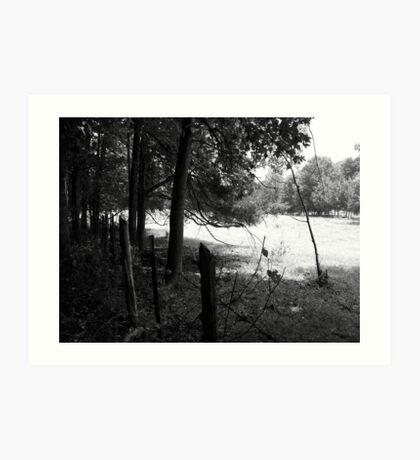 Fenced Field Art Print