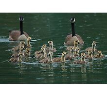 Disorderly Geese Photographic Print