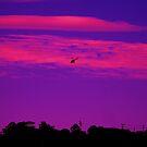 FLYING HIGH... by LESLEY BUtler