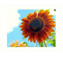 Autumn Burst Sunflower Art Print