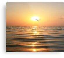 Sea, sunset and seagull Metal Print