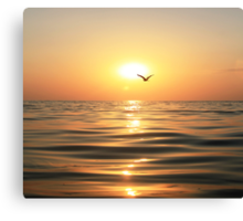 Sea, sunset and seagull Canvas Print