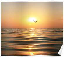 Sea, sunset and seagull Poster