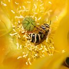 A Wasp Bathes In Yellow Pollen by DARRIN ALDRIDGE