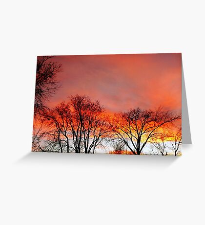Extravaganza of Color Greeting Card