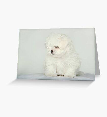 Maltese Puppy Greeting Card