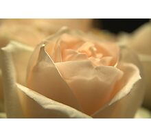Softness Photographic Print