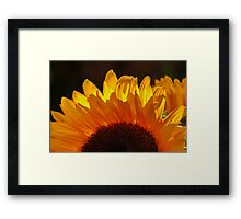 Yellow Sunflower, Our Only SUNSHINE !!!! Framed Print