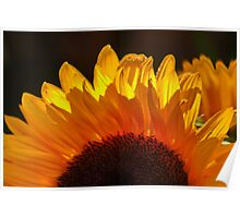 Yellow Sunflower, Our Only SUNSHINE !!!! Poster