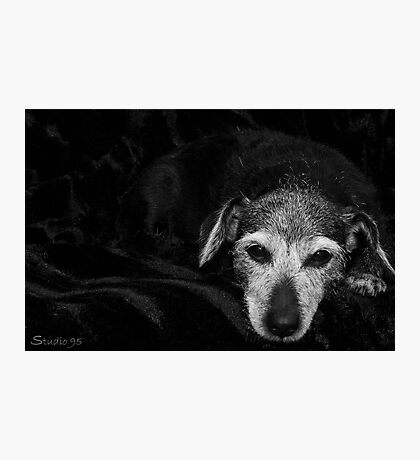 A Dogs Life  Photographic Print