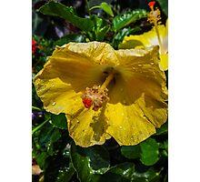 sunshine yellow Photographic Print