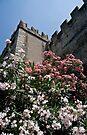 Lake Garda - Malcesine Castle by imagic