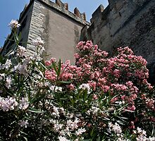 Lake Garda - Malcesine Castle by imagic